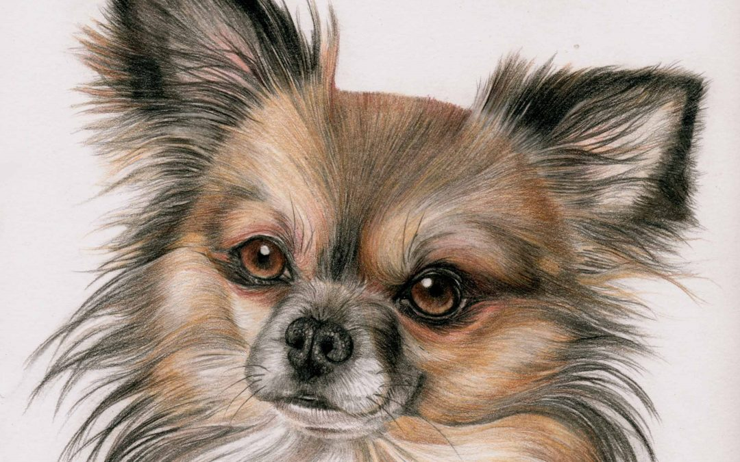 Introduction to Drawing Pets in Coloured Pencil