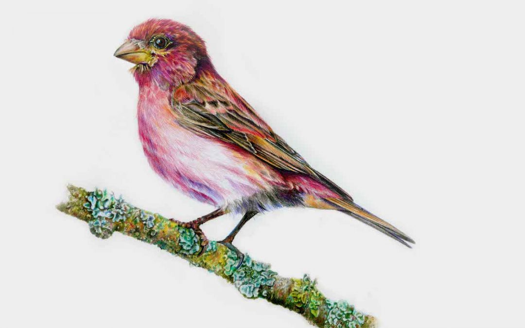 Mini-workshop: Birds of the Watershed (Graphite and Coloured Pencil)